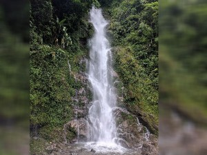 Rimbi Waterfall Sikkim Attractions And How To Reach