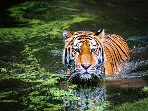 Wildlife Sanctuaries To Visit In India During Winter Season