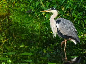 Topmost Bird Photography Destinations In Maharashtra