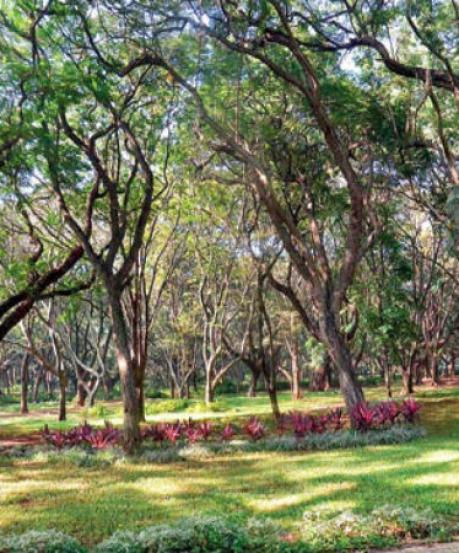 ನೀವು ಫ್ರೀಯಾಗಿದ್ದಾಗ ಬೆಂಗಳೂರಿನಲ್ಲಿ ತಿರುಗಾಡಬೇಕಾಗಿರುವ ಸ್ಥಳಗಳಿವು