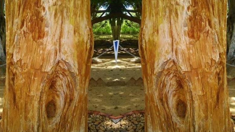 ಇಲ್ಲಿದೆ ಕಲ್ಲಾಗಿ ಬದಲಾದ 2 ಕೋಟಿ ವರ್ಷದ ಮರಗಳು